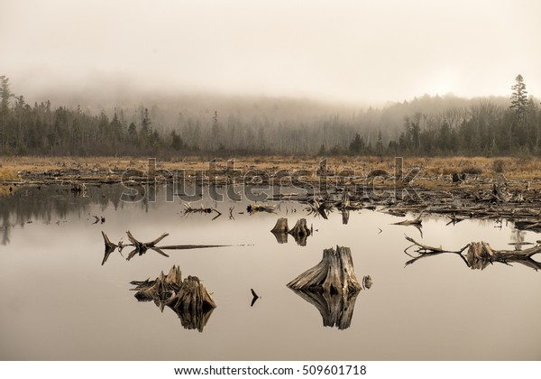 Foggy swamp with dead trees created by Beavers in Autumn Haliburton, Ontario, Canada
