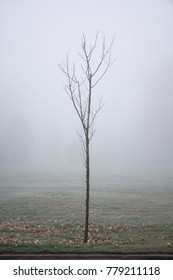 Foggy tree in nature on winter