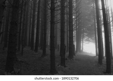 Foggy trees in the moors in winter
