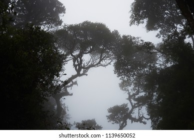 Foggy treetops in deep forest. Magnificent heavy mist in landscape. Tree, branch, leaf, foggy and misty view with blur background. Bottom view of tall old trees. Mysterious silhouette branch trees.