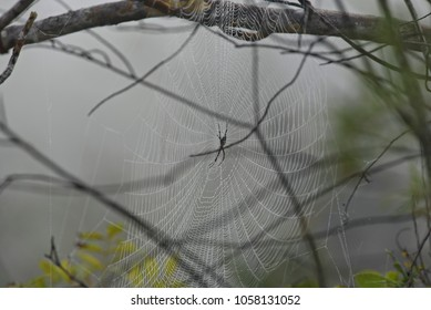 Foggy View of Spider and Spider Web