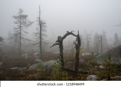 Foggy wasteland with carcass of crooked trees looking like a magic portal. Vottovaara mountain after the wildfire. Karelia. Russia. Autumn landscape.