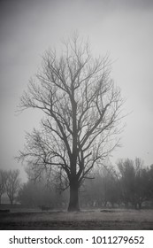 Foggy weather rural landscape moody monotone background trees and water