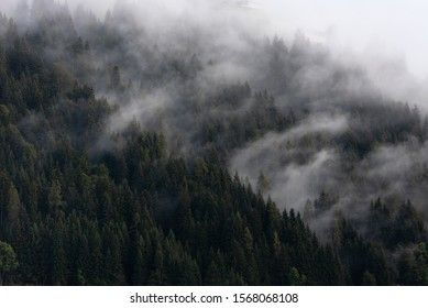 Foggy weather and spruce forest