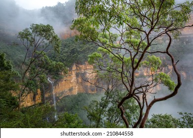 Foggy Wentworth Falls and Eucaliptus Tree, Blue Mountains, Australia