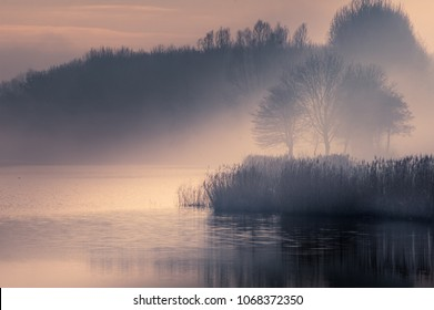 foggy winter afternoon in nature