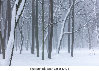 foggy winter forest with frozen trees and snow on ground