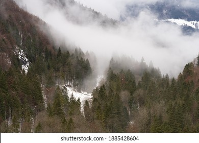 Foggy winter forest landscapes along the shores of the Wagital lake in the idyllic pre-alps region of the Schwyz canton, Central Switzerland