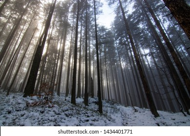 Foggy winter forrest in Central Europe
