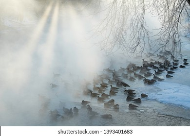Foggy winter landscape with sunbeams of Canada geese resting on an ice shelf in the Kalamazoo River, Michigan, USA