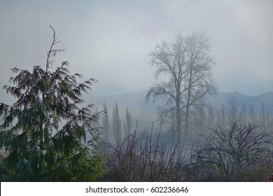 Foggy winter morning in a field in the foothills of the the Cascade mountains in Washington state with bare trees, a frozen evergreen tree to the left & a view of the mountain range in the background.