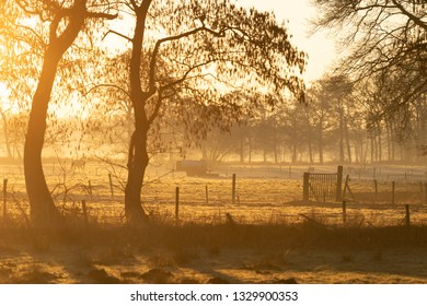 Foggy, winter sunrise in the countyside. Drenthe, Holland.