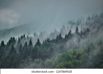 foggy woods after rain