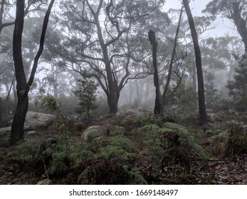 Foggy Woods in the Morning