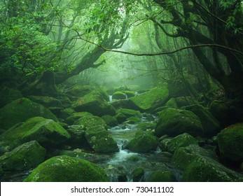 Foggy Yakushima Forest after rain, Japan