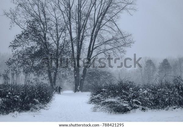 fogshrouded-wintry-meadow-crosscountry-s