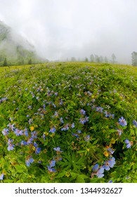 Fogy field of blue flover on a cloudy day