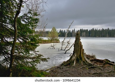 Fogy frozen lake in the woods