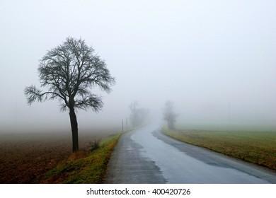 Fogy road