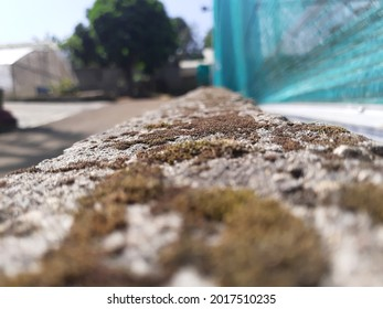 Fokus on Outdor Mossy Rock