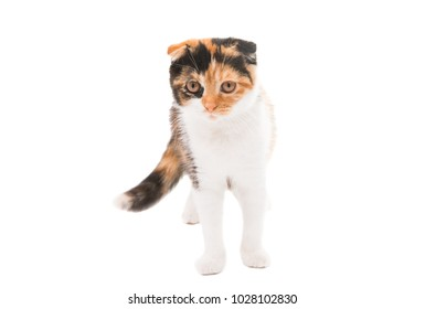 Fold colored cat isolated on white background