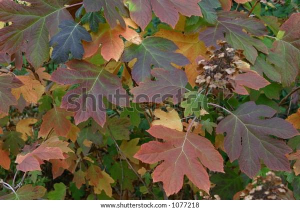 Foliage at autumn