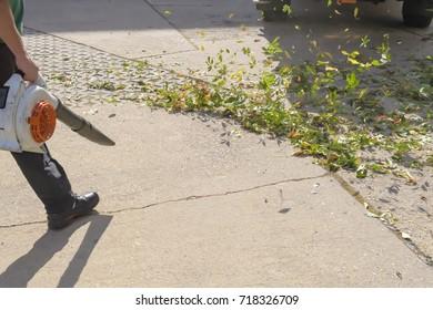 Foliage is blown by a sidewalk