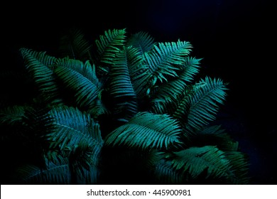 Foliage in the dark of night. Fern.