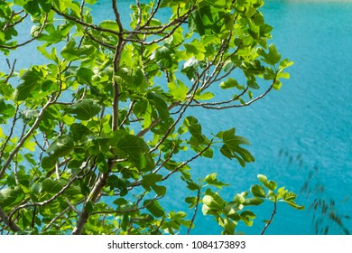 Foliage in front of the water