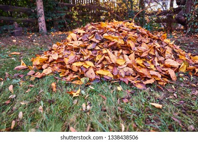 Foliage in the garden, autumn, gardening, piles of leaves, colorful leaves, seasons