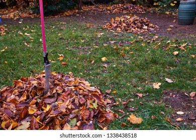 Foliage in the garden, autumn, gardening, piles of leaves, colorful leaves, seasons, foliage fork