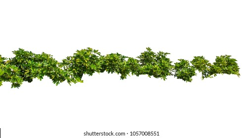 Foliage garland, cute grass, or green bushes isolated on a white background