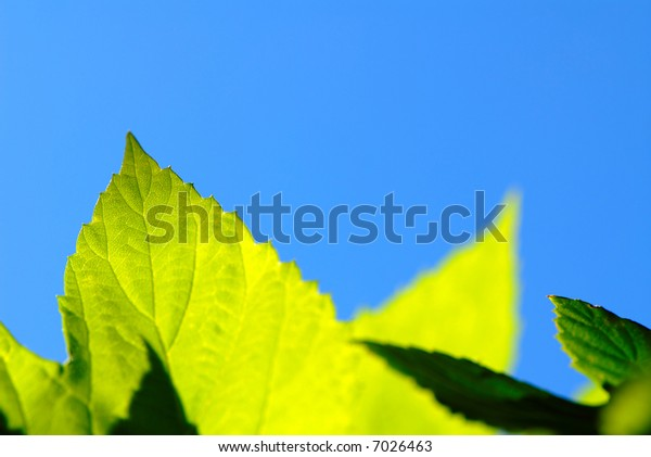 foliage is green on  background of  dark blue sky