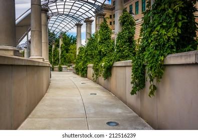 Foliage hanging along a walkway at Pack Square Park in Asheville, North Carolina.