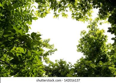 Foliage isolated on white