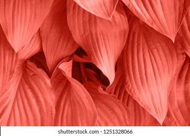 Foliage with main trendy Living Coral color of the year 2019. Colorful concept.