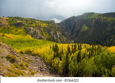 Foliage Near the Colorado and New Mexico Border