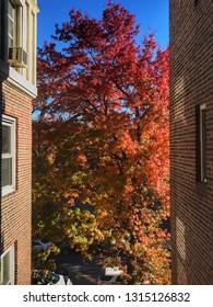 Foliage, New York