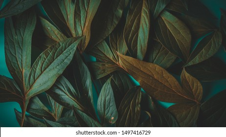 foliage on a blue background, place for text