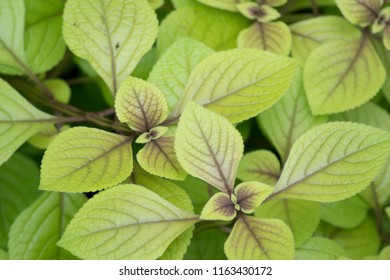 foliage pattern showing interesting textures great as wallpaper or background