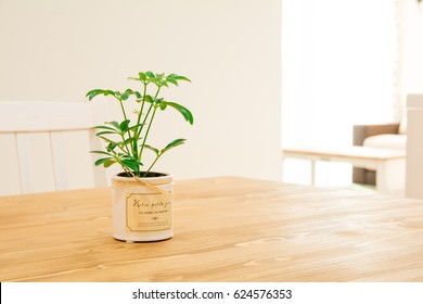 A foliage plant on the dining table