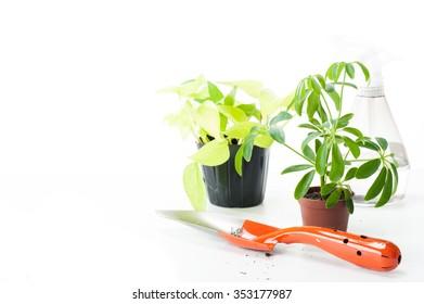 Foliage plant, white background
