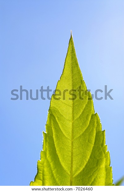 foliage of plants covered by  sunlight in autumn park,  close up