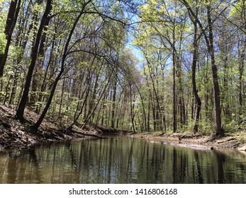 Foliage surrounding lake Hartwell, South Carolina.