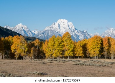 Foliage trees in front of the snowy mountains