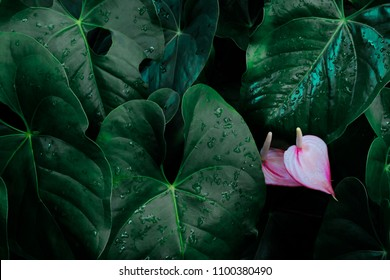 Foliage of tropical leaf in dark green with flower,  abstract nature background.