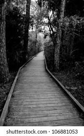 Follow Down my Path