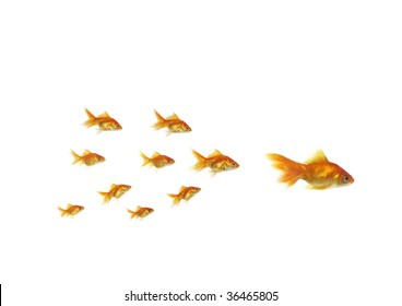 following shoal small gold fish for large on white background