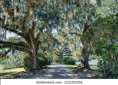 Following the Tree-Lined Path Leading Through Jungle Gardens at Avery Island in Iberia Parish Louisiana in Autumn