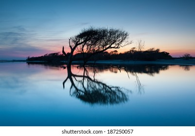 Folly Beach County Park Charleston South Carolina Lone Tree Reflecting at Sunset